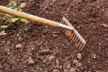 Canva - Rake in the Garden